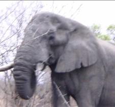 Ivory Lodge & Safari Pictures0049