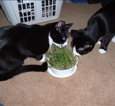 Cat Grass Fun 1