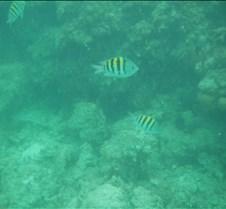 Cancun 2005 (32)