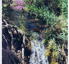 Fireweed & Waterfall