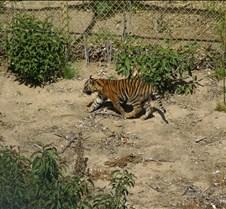 Wild Animal Park 03-09 096