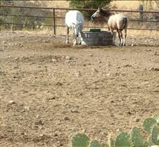 Tucson Lazy K horses 2