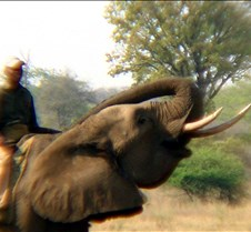 Elephant Ride0009