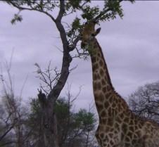 Ivory Lodge & Safari Pictures0122