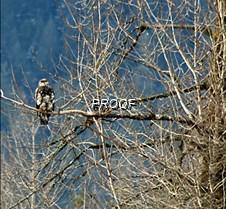 eagletree-10