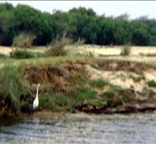 Sunset River Cruise Zambezi River0025