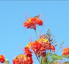 Tucson Lazy K butterfly 2