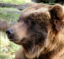 013004 Kodiak Female 135
