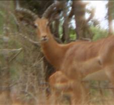 Ivory Lodge & Safari Pictures0157