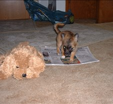 puppy picts 9-21-03 010