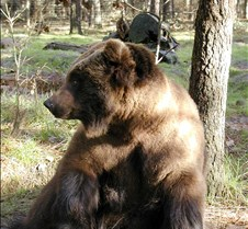 013004 Kodiak Female 125