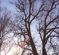 tree1-1 copy