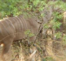 Ivory Lodge & Safari Pictures0151