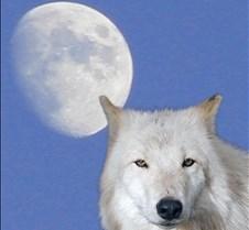 Wildlife Images #56
