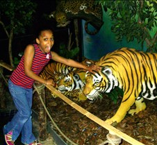 Dorie Petting Tiger
