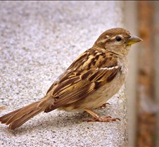 Bug Fair Sparrow 1