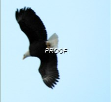 eagleflight-20