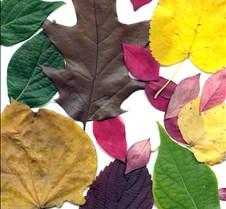 leafscanasst