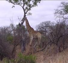 Ivory Lodge & Safari Pictures0121