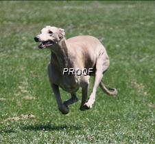 Test_dog_9574Cr