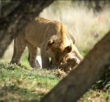 Wild Animal Park 03-09 151