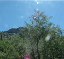Tucson Sabino Canyon 39
