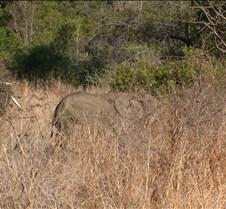 Ivory Lodge Safari Mupulanga0050