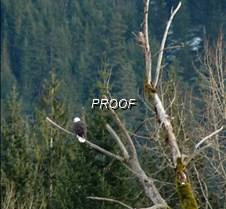 eagletree-19