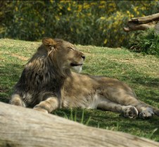 Wild Animal Park 03-09 167