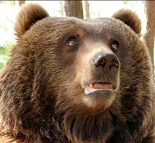 "Bear Reactions to Colbert's ""Threat Down"""