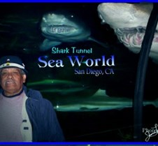 My_Dad_and_the_Sharks