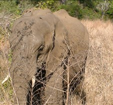 Ivory Lodge Safari Mupulanga0046