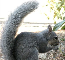 071702Squirrel105