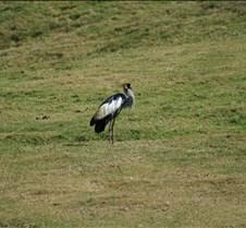 Wild Animal Park 03-09 119