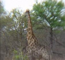 Ivory Lodge & Safari Pictures0087