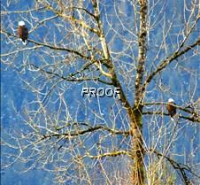 eagletree-13