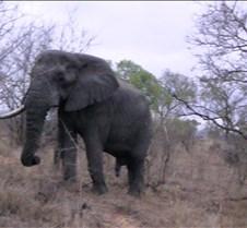 Ivory Lodge & Safari Pictures0047