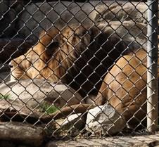 J Zoo 0611_125
