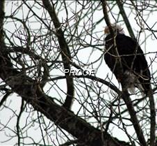 eagletree-2