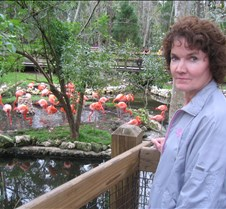 Pam checking out Flamingos