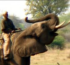 Elephant Ride0008
