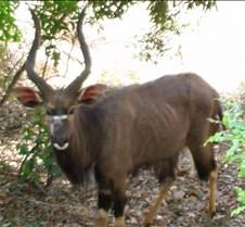 Ivory Lodge Safari Mupulanga0065
