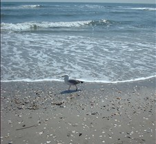 Beach Atlantic City9