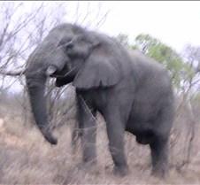 Ivory Lodge & Safari Pictures0051