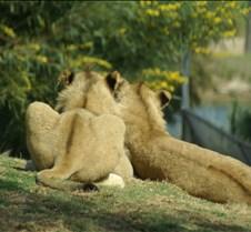 Wild Animal Park 03-09 175