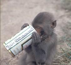 Monkey Likes Beer