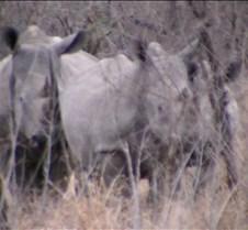 Ivory Lodge Safari Mupulanga0020