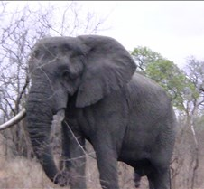 Ivory Lodge & Safari Pictures0048