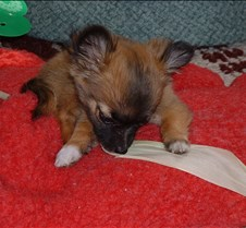 pup aug 30 002