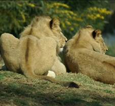 Wild Animal Park 03-09 185